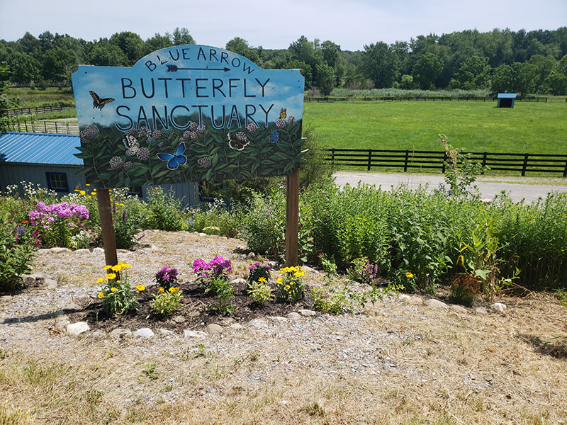 Painted sign for Blue Arrow butterfly sanctuary surrounded by flowers
